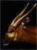 Портрет антилопы Бонго