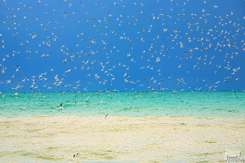 Чайки на море летали
