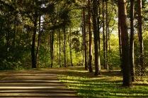 Дорожки Ботанического сада