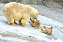 Медвежьи игры
