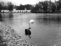 Чёрное и белое