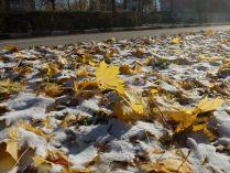 Осень встретилась с зимой