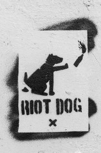 Мятежный пес