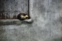 Кошачий угол старого дома