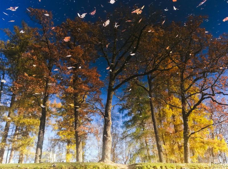 Осенняя вьюга.
