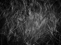 Травы спят