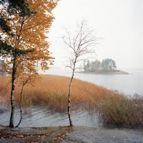 Осень в парке Монрепо.