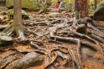 Где-то в дремучем лесу