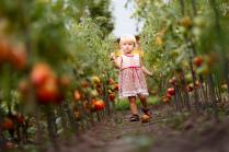 Возраст, когда кусты помидоров выше тебя