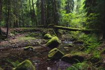 Сказочный пейзаж Кавказского заповедника