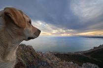Пейзажный пёс.