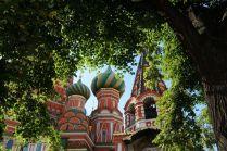Липа у Покровского собора