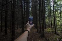 Лес глазами смартфона
