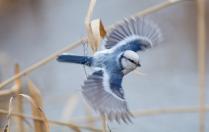 Крылья веером