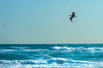 Полёт мысли и полет ветра и крыльев — явления в равной степени материальные.