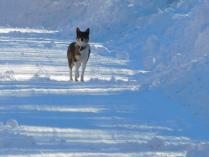 Охранник зимней тишины.