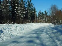Зимняя сказка  леса.