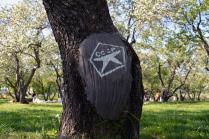 Деревья-ветераны