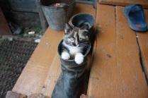 Кот в сапоге
