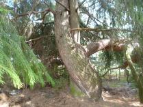 Лесной проулок