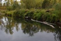 Сонные реки,тихая вода.