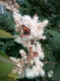 Счастье подобно бабочке