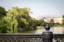 Новодевичий пруд и птица