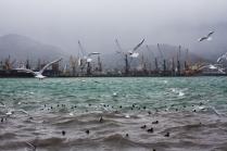 Чайки. Новороссийск