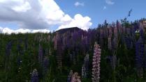 Нежность полевых цветов