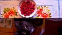 Малиновый кот