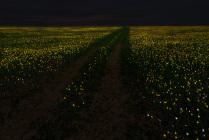 Тюльпанная степь в полнолуние