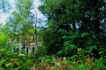 Руины в лесу