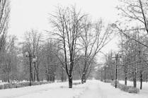 Зима в городском парке