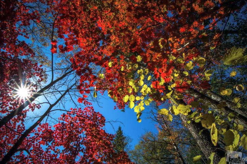 Осень на Шкотовском плато