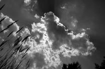 Облака глазами собаки
