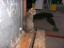 кот,ожидающий автобус