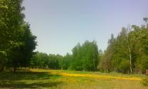 Одуванчиковая поляна