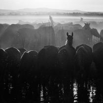 Пит-стоп на перегоне лошадей