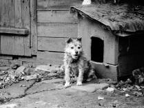 Жил-был пес