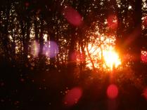 Закат на фоне мошек