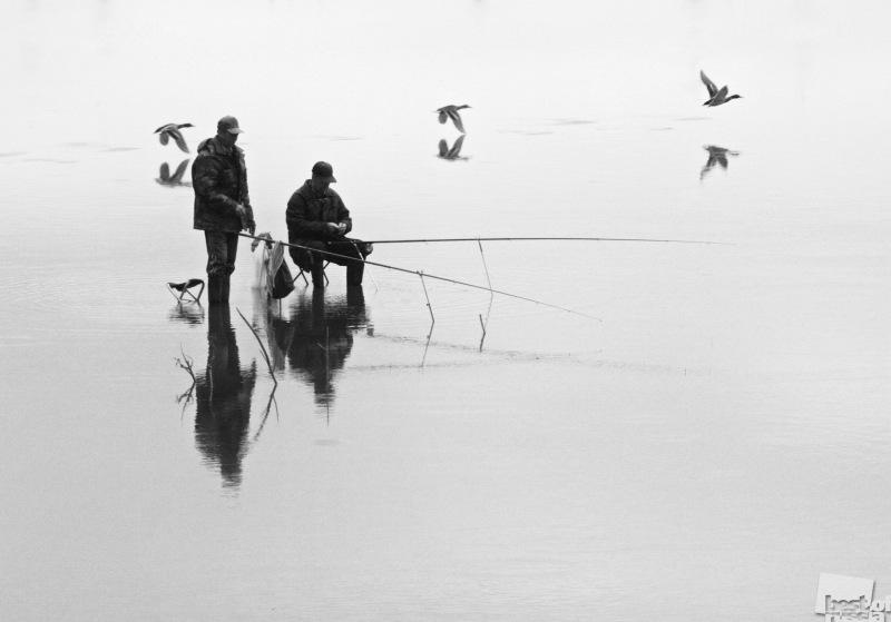 Из жизни водоплавающих