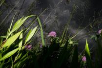 Ниже травы