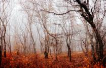 """""""Осенью весь мир жаль..."""""""