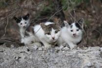 Джанхотовские коты