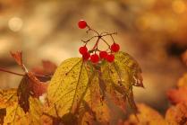 Обняла природу осень, в руки кисти взяв и холст