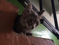 Куда смотрит котейка?