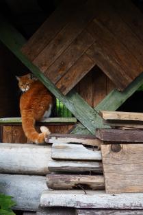 Кошачья вылазка