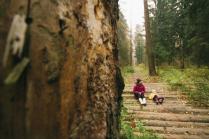 Слушать звуки леса