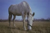 Лошадь Питера.