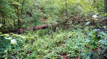 Оренбургский лес